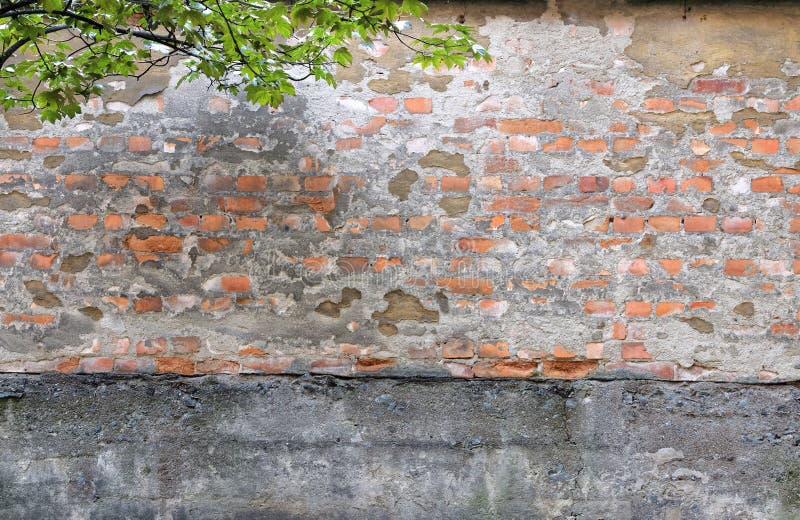 Advirta a parede de tijolo e os leafes foto de stock royalty free