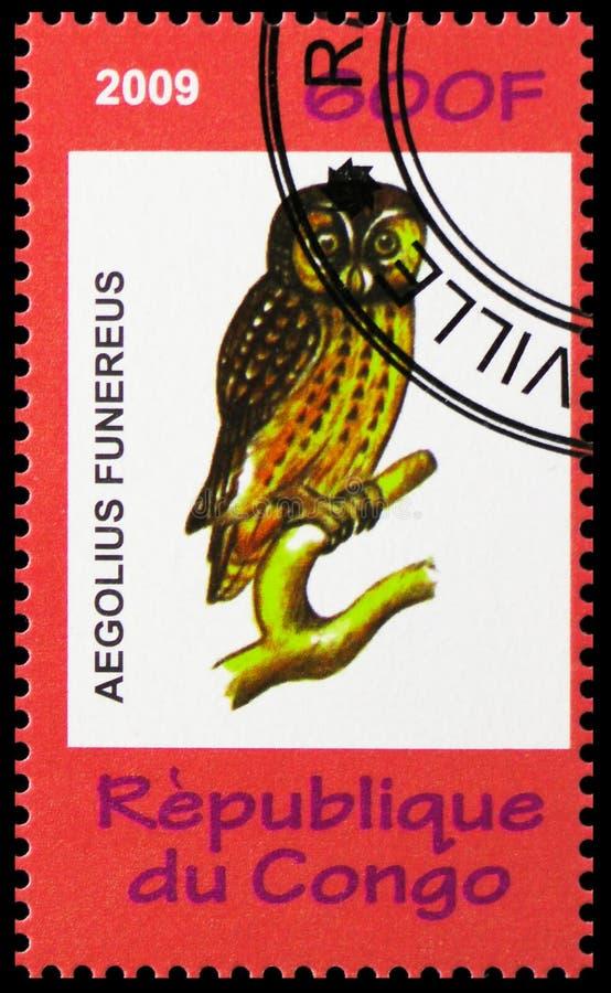 Aegolius funereus,动物和蘑菇serie,大约2009年 库存照片