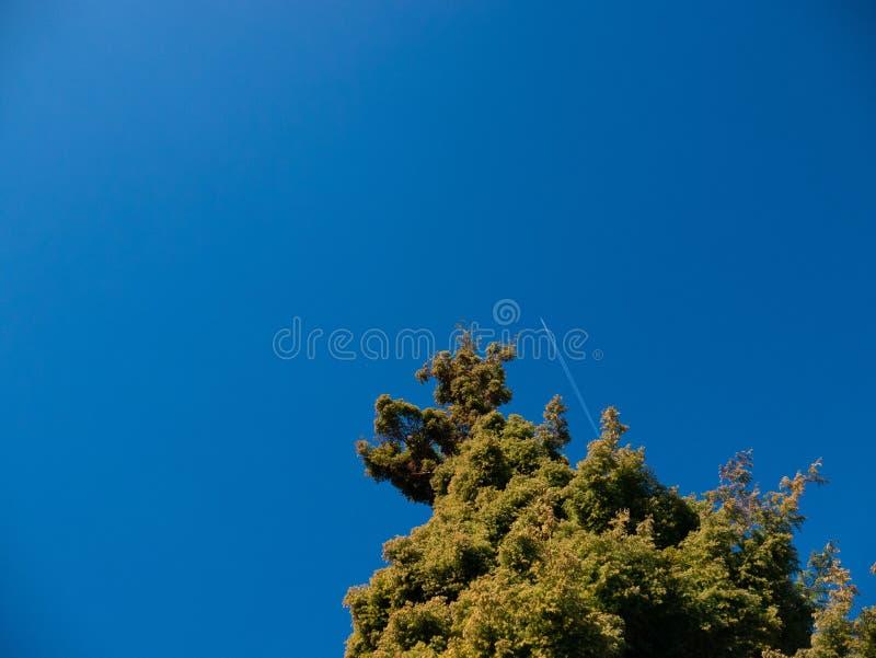 Aereo con il hign di volo delle tracce in cielo con il pino in priorit immagine stock libera da diritti