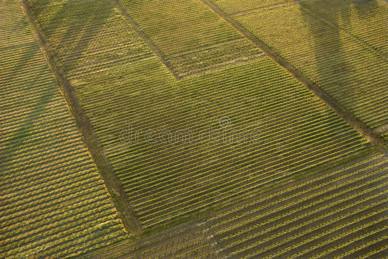 aerial of crops stock image image of farm line rows