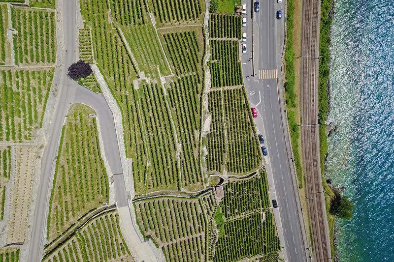 Aerial of vineyards by the lake, Lavaux, Switzerland stock images