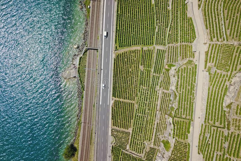 Aerial of vineyards by the lake, Lavaux, Switzerland royalty free stock image