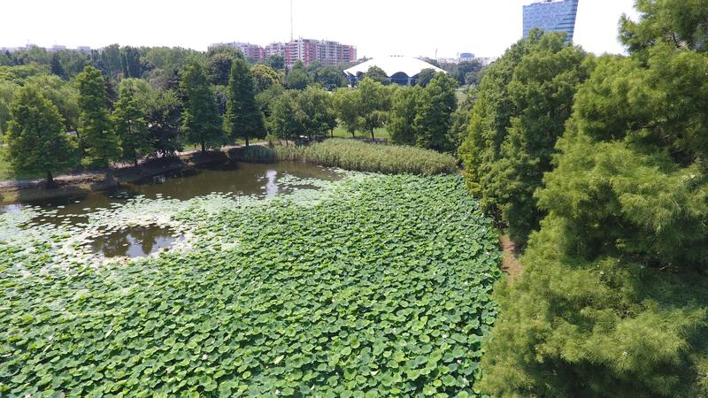 Aerial drone flight over a beautiful pond filled with water lilies. In the Summer season stock images