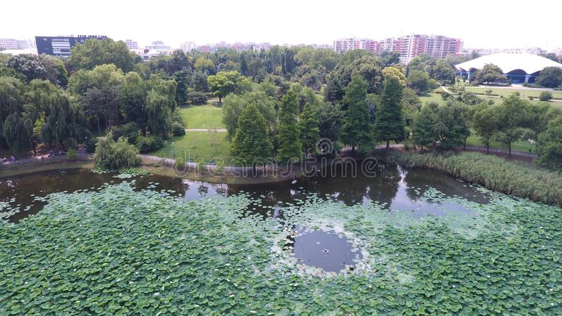 Aerial drone flight over a beautiful pond filled with water lilies. In the Summer season royalty free stock image