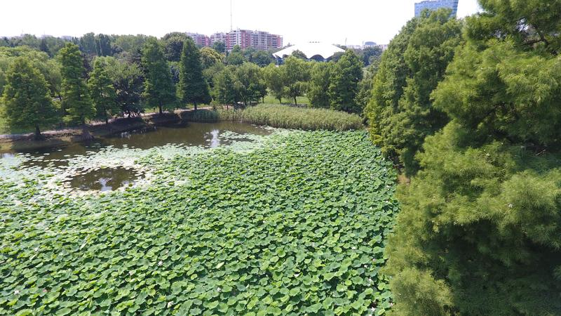 Aerial drone flight over a beautiful pond filled with water lilies. In the Summer season stock photo