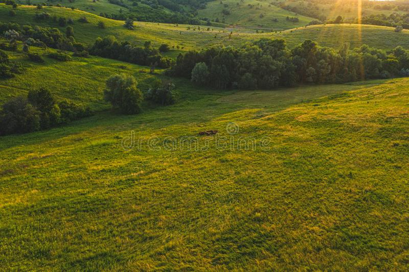 Aerial drone flight scenic panoramic view countryside with sheep stock photo