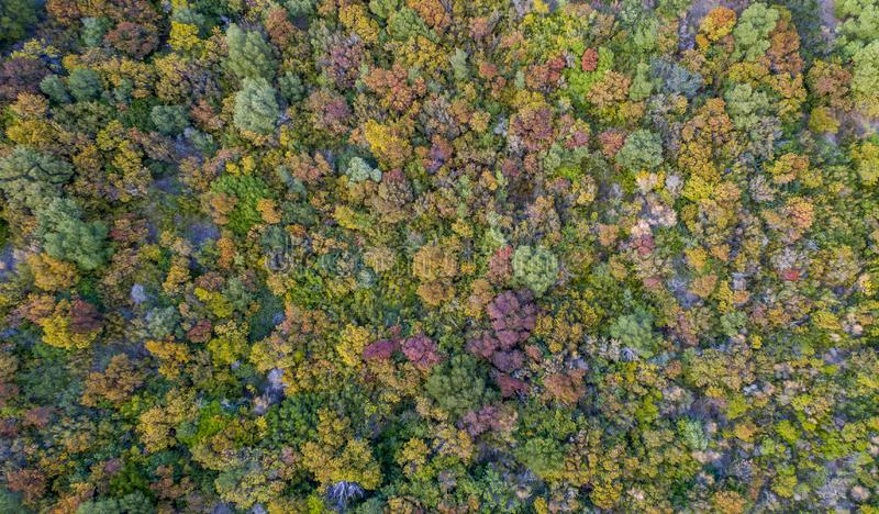 Aerial drone image of a colorful forest in Corfu Greece. Aerial drone image of a forest in Corfu Greece royalty free stock images