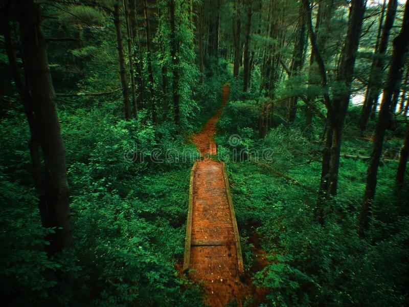 Aerial drone shot of a bridge and pathway through a lush forest. stock images