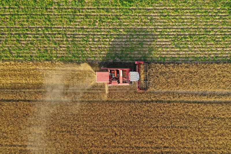 Aerial drone top down view on red harvester during wheat field harvesting, collecting seeds, making dust cloud, driving forward royalty free stock photography