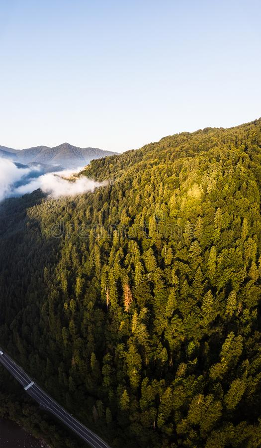 Aerial drone view above misty mountains and coniferous forest. Vertical landscape. Morning time. Carpathians, Ukraine royalty free stock images