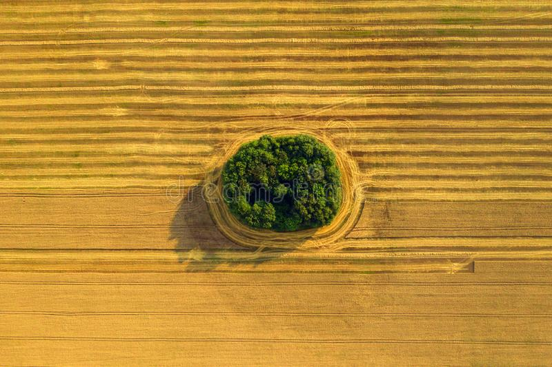 Aerial drone view of cultivated farmland and fields during the summer in Wales, stock photography