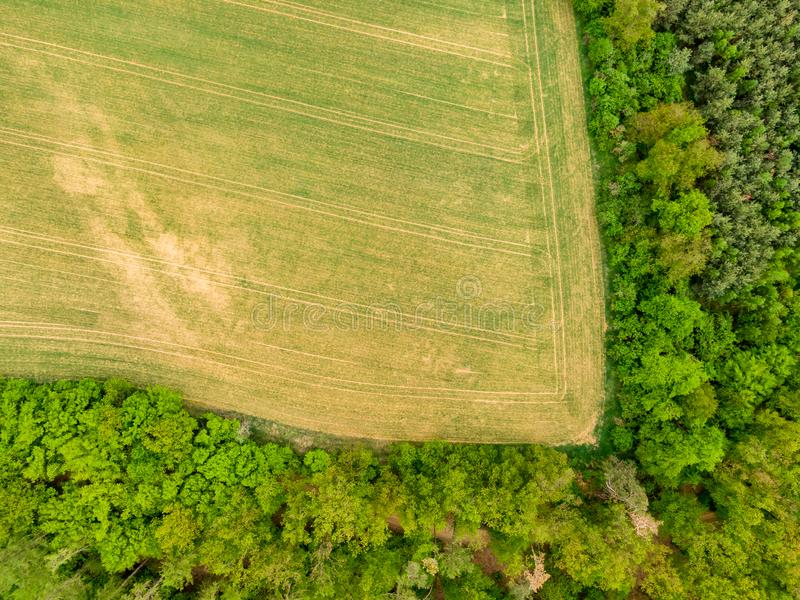 Aerial drone view of field, trees and forest in agriculture land. Top look to meadow near village and farm. Beautiful green fresh. Crop on spring day after rain stock photography