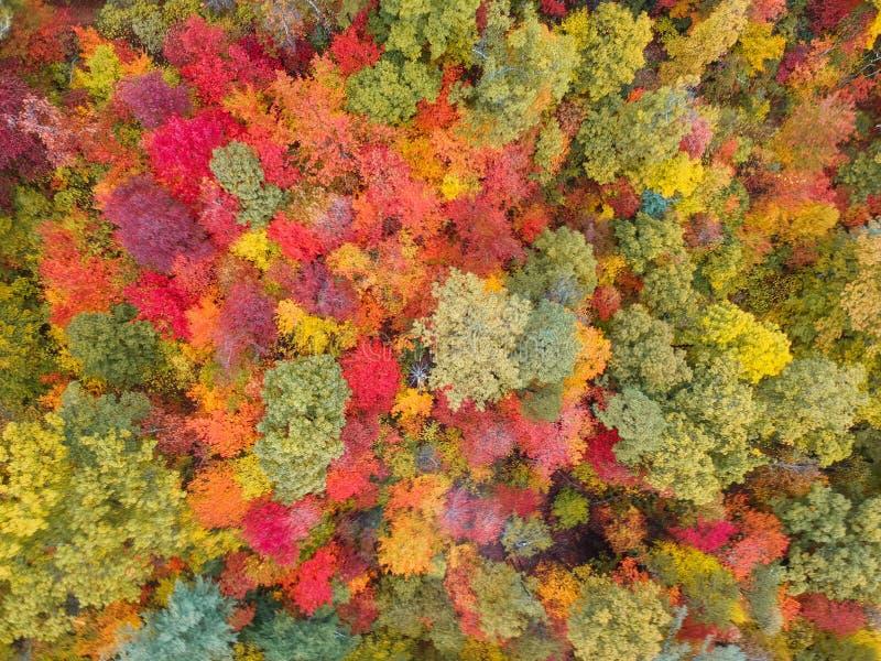 Aerial Drone view mit dem farbenfrohen Herbstlaub in der Nähe von Asheville, North Carolina Lebendes Rot, Gelb, Tee, Orange stockfoto