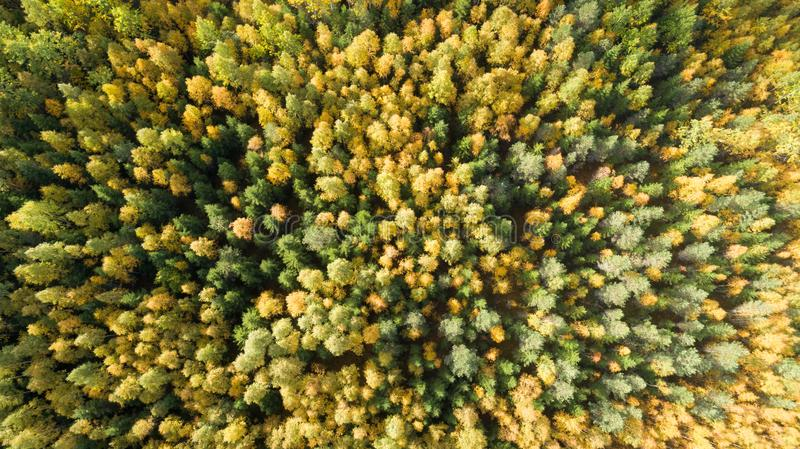 Aerial drone view of stunning colorful autumn fall forest at sunset. Drone Aerial View Concept. stock images
