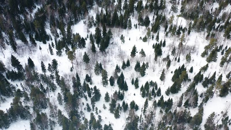 Aerial Drone View Of Winter Forest Covered In Snow Beauty Of Nature Footage Frozen Pine Trees Forest Top View Stock Image Image Of Conifer Season 146691771