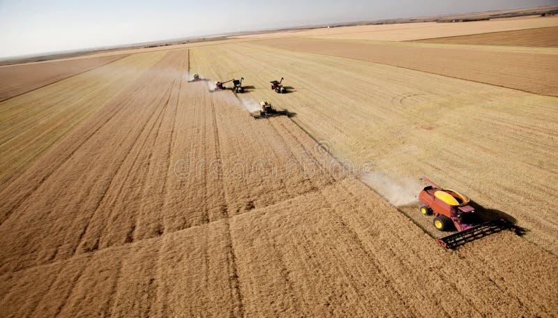Aerial Harvest Landscape royalty free stock photo