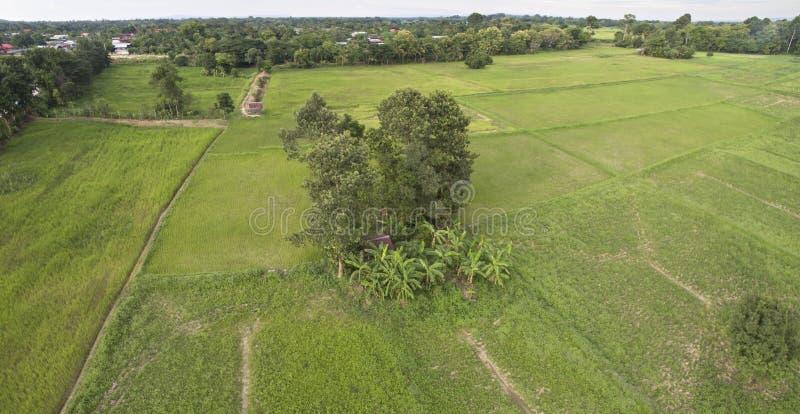 Aerial image Thai rice filed stock photos