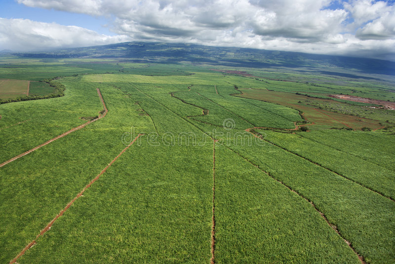Aerial of irrigated cropland. stock image