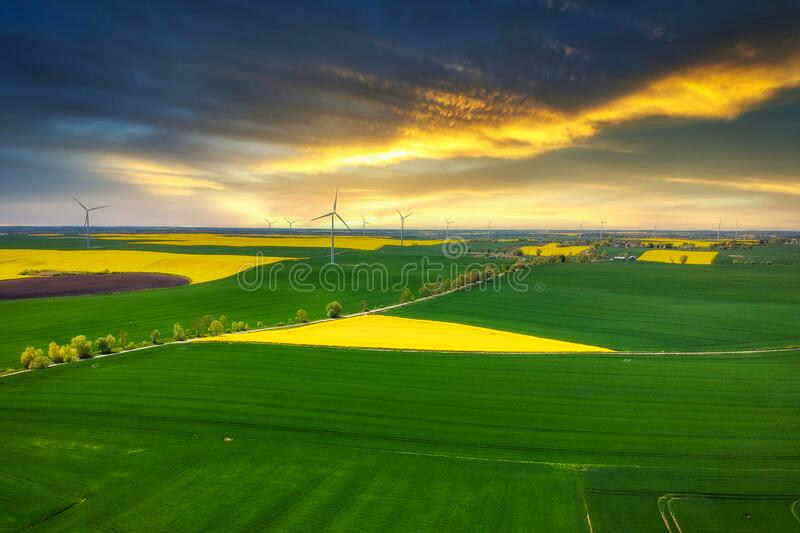 Aerial landscape of the yellow rapeseed field at sunset, Poland stock photo