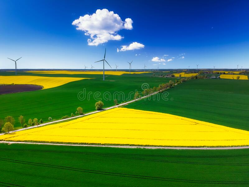 Aerial landscape of the yellow rapeseed field under blue sky, Poland royalty free stock images