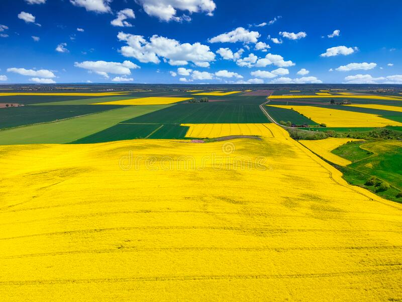 Aerial landscape of the yellow rapeseed field under blue sky, Poland royalty free stock photos