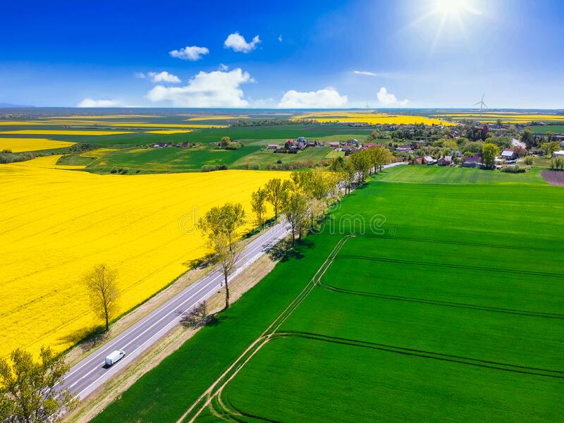 Aerial landscape of the yellow rapeseed field under blue sky, Poland stock image