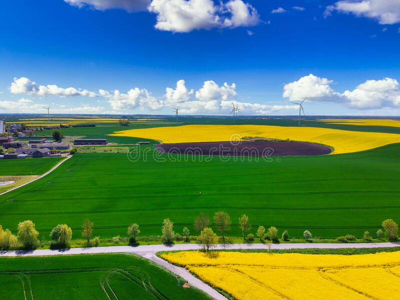 Aerial landscape of the yellow rapeseed field under blue sky, Poland royalty free stock photo