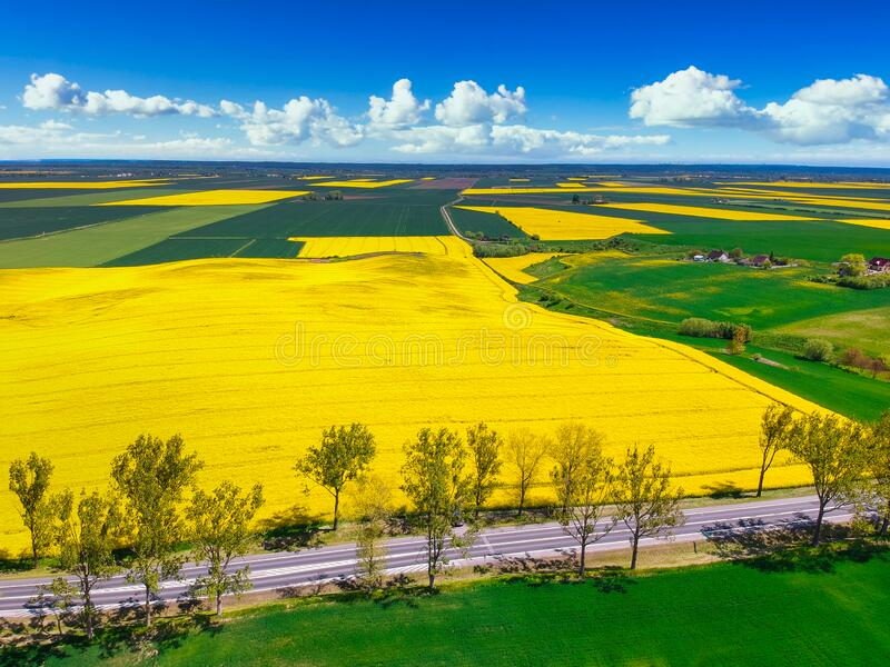 Aerial landscape of the yellow rapeseed field under blue sky, Poland stock images