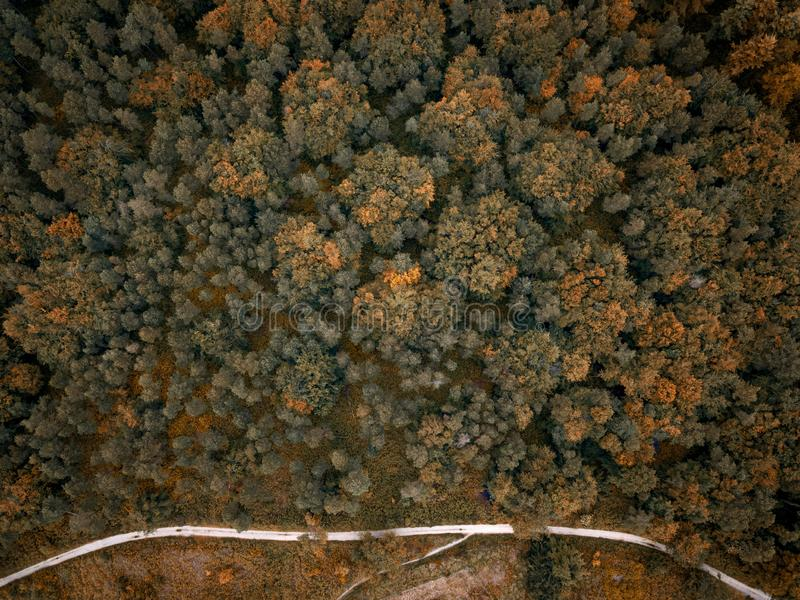 Aerial overhead shot of orange and green trees next to a road royalty free stock photo