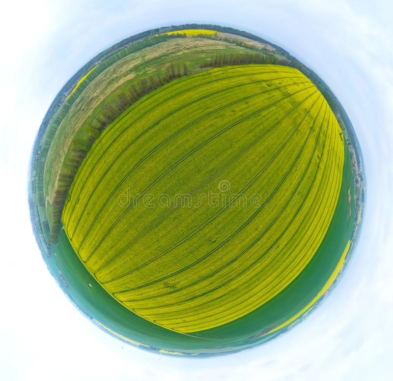 Aerial 360 panoramic tiny planet view on yellow field of blooming rapeseed and tractor tracks royalty free stock image