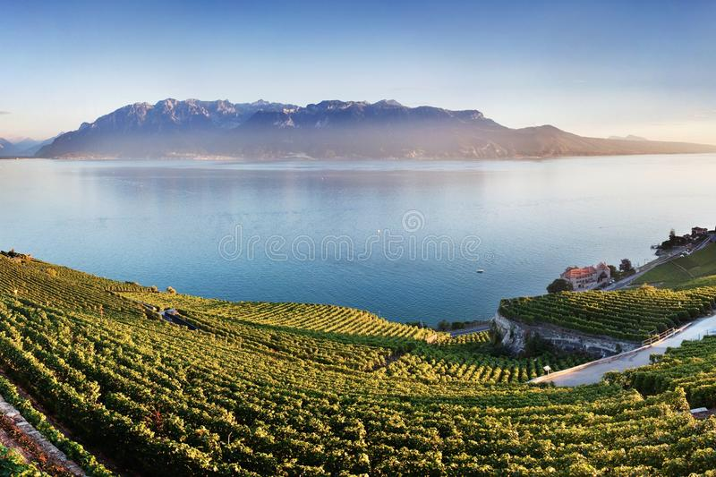 Aerial panoramic view of the city of Vevey at Lake Geneva with vineyards of famous Lavaux wine region on a beautiful sunny day. royalty free stock images