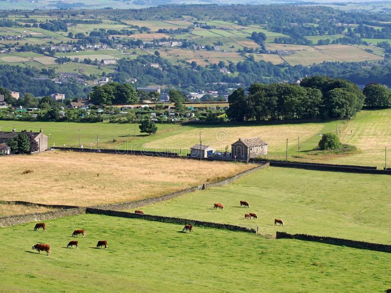 Aerial panoramic view of west yorkshire countryside in the calder valley near luddenden with cows grazing in meadows and stock image