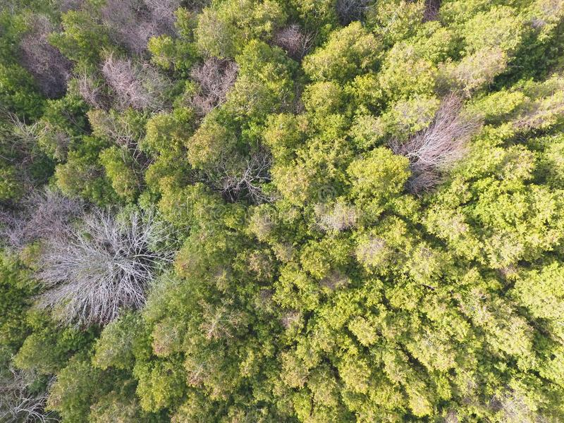 Aerial Photo of Green Forest Trees royalty free stock photo