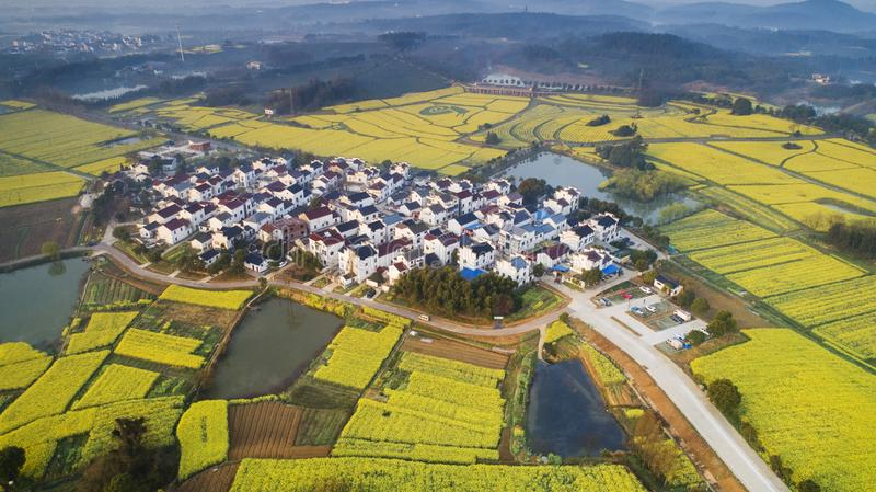 Aerial photo of 10,000 mu rape flower field in nanjing, jiangsu province, China royalty free stock photography