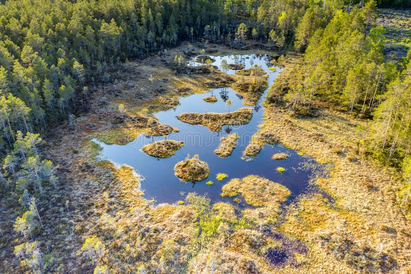 Aerial photo of ordinary swamp in Swedish pine tree forest. Sunny day, no wind. Northern Sweden, Vasterbotten, Umea. Stocksjo royalty free stock images
