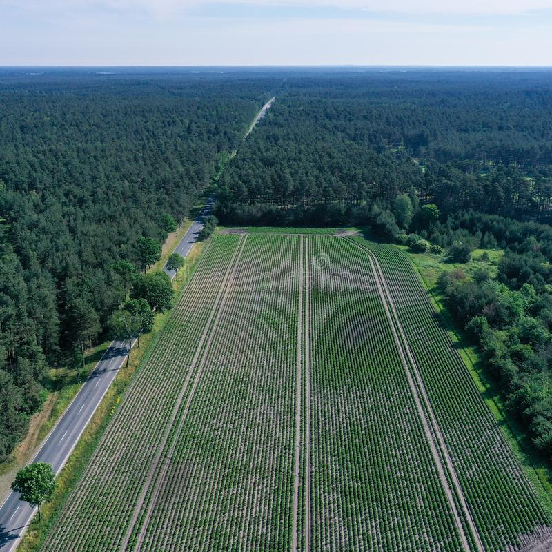 Aerial photograph of a rectangular, arable land between woods and a dead straight asphalted country road from greater height,. Aerial photograph of a rectangular stock photography