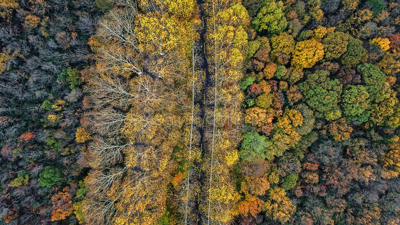 Aerial photography - botanical garden autumn scenery royalty free stock photo
