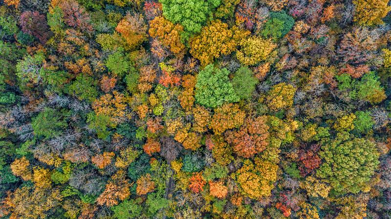 Aerial photography - botanical garden autumn scenery stock images