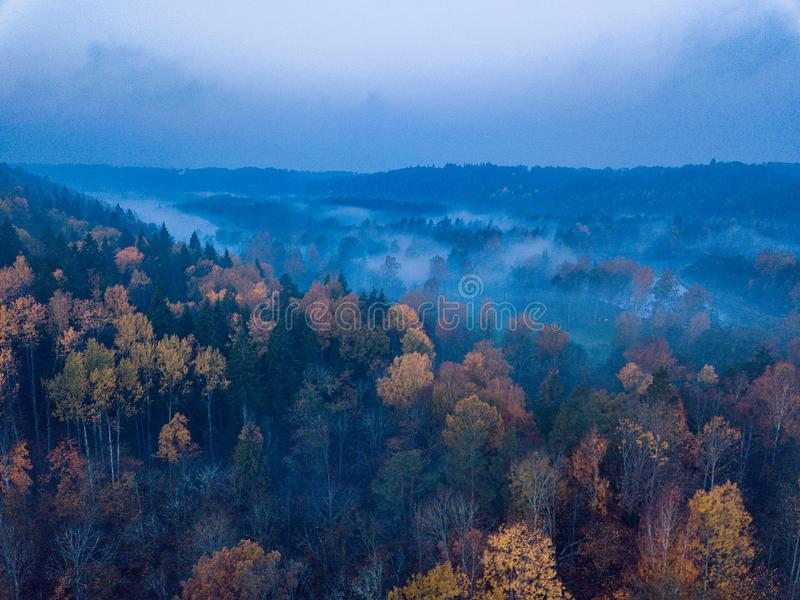 Aerial Photography of a Forest in Foggy Autumn Morning stock photo
