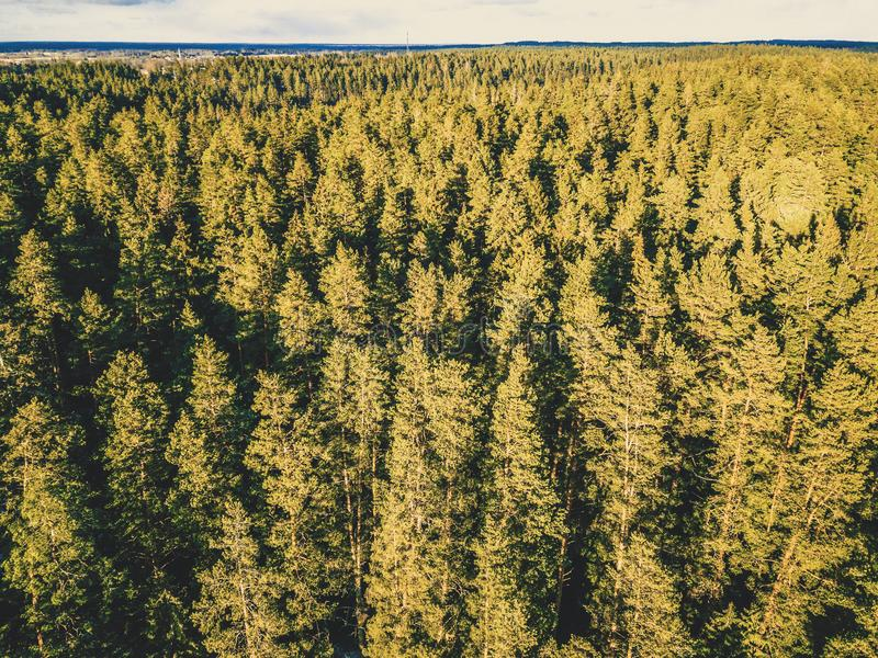 Aerial Photography of a Forest in Winter - vintage look edit royalty free stock photo