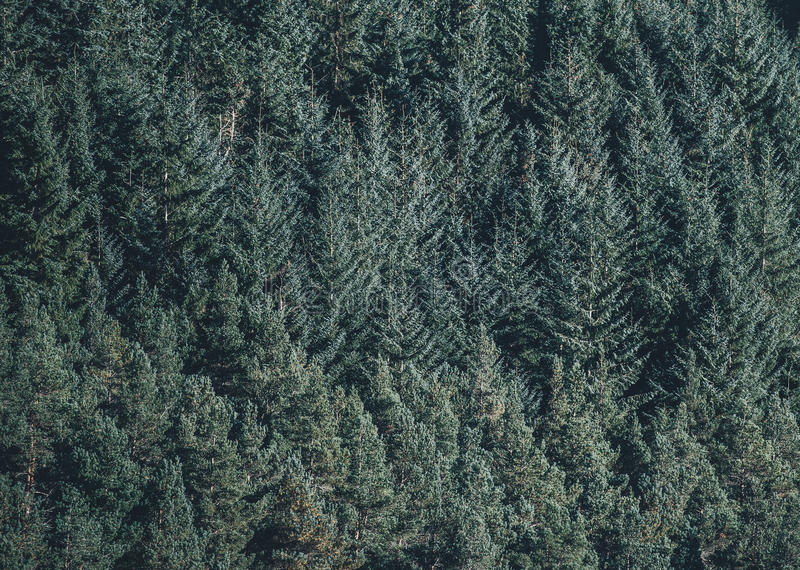 Aerial Photography Of Green Pine Trees Free Public Domain Cc0 Image