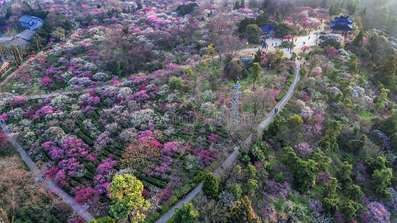 Aerial photography - Meihuashan Wanmu Meiyuan royalty free stock photo