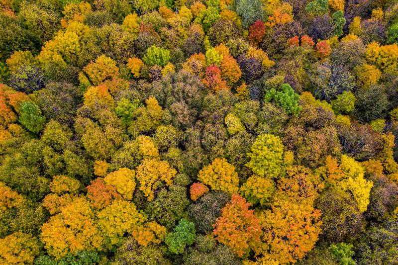 Aerial photography with quadrocopter autumn colorful forest, colorful bright caps of trees from a bird`s eye view.  royalty free stock images