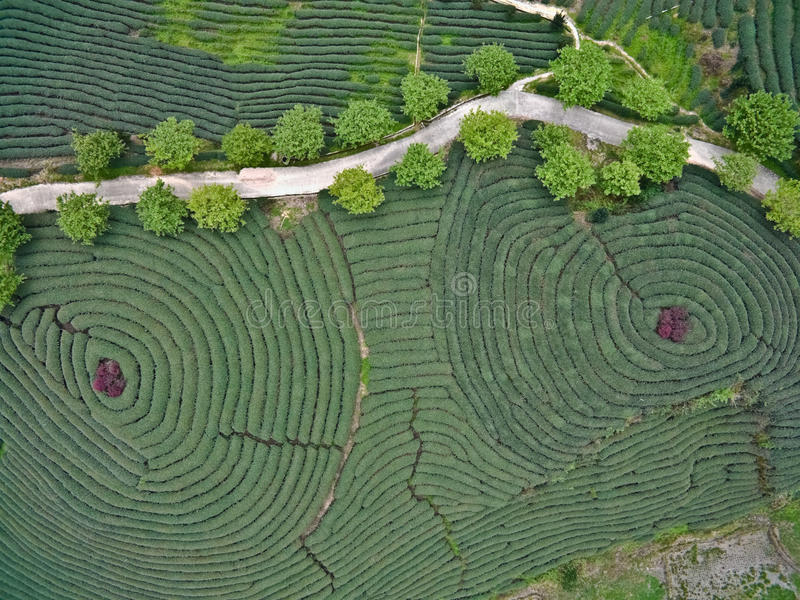 Aerial photography on top of the mountain tea garden landscape royalty free stock images