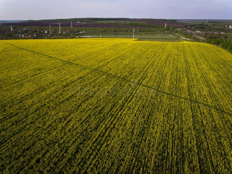 Aerial photos of yellow oilseed. With walkway stock image