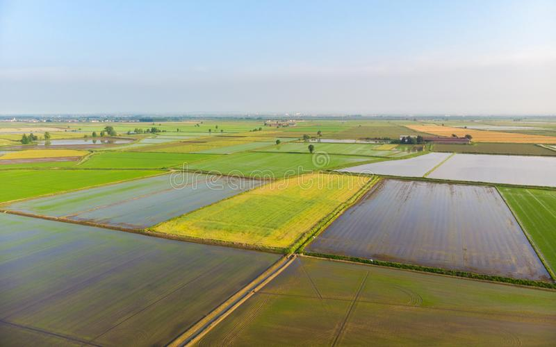 Aerial: rice paddies, flooded cultivated fields farmland rural italian countryside, agriculture occupation, sprintime in Piedmont, royalty free stock image