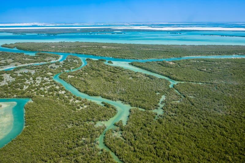 Aerial shoot for eastern mangrove tree. Aerial shoot for eastern mangrove tree in Abu Dhabi united arab emirates royalty free stock photos