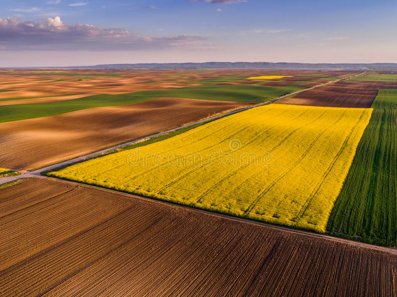Aerial shot of canola, seed from a drone. Beautiful agricultural landscape stock photo