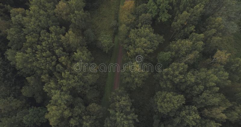 Aerial shot fly over wild park or forest in cloudy day. Wide photo royalty free stock image