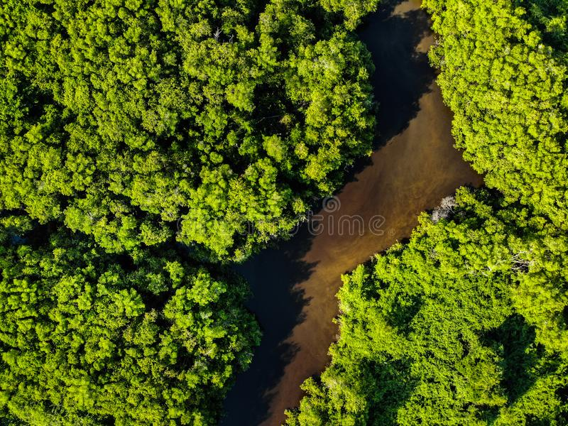 Aerial Shot Of Forest Free Public Domain Cc0 Image